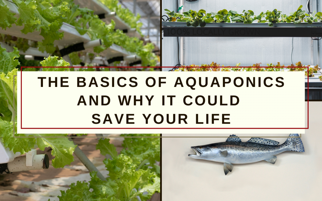 Basics of Aquaponics and Why It Could Save Your Life