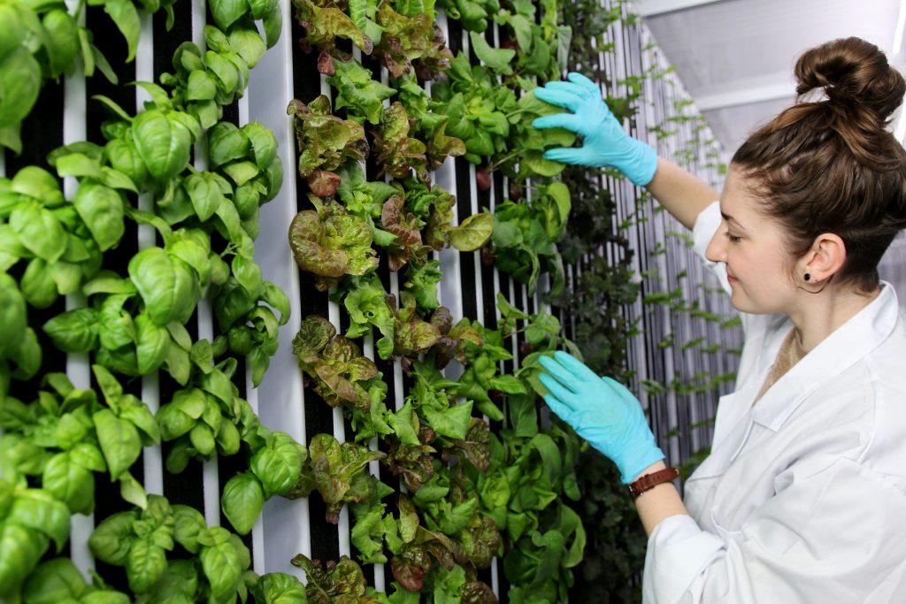 Vertical hydroponic growing racks. Photo courtesy of https://www.freightfarms.com